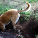 The way to Deal With Your Canine's Incessant Digging