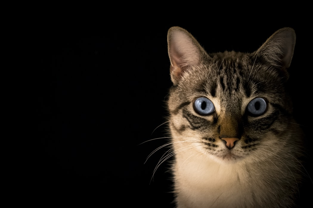 Learn how to: Look after Your Pet Cat or Kitten