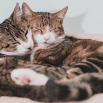 10 issues that make proudly owning a number of cats simpler
